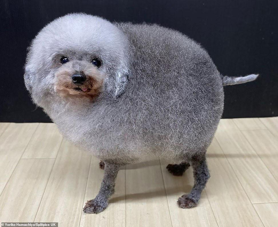 Может ли собака быть похожей на овцу