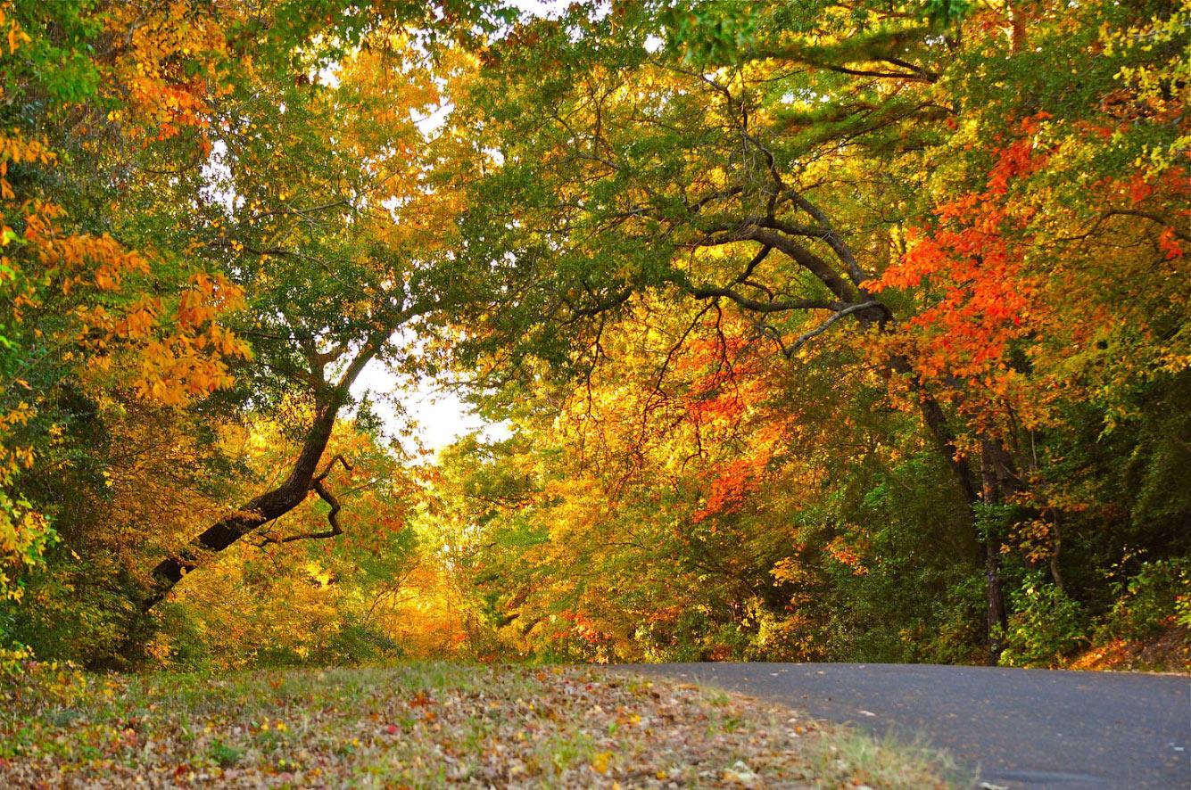 Осень в Восточном Техасе