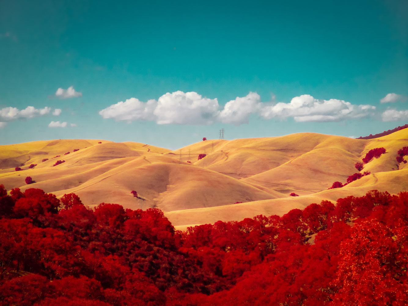 Золотые холмы