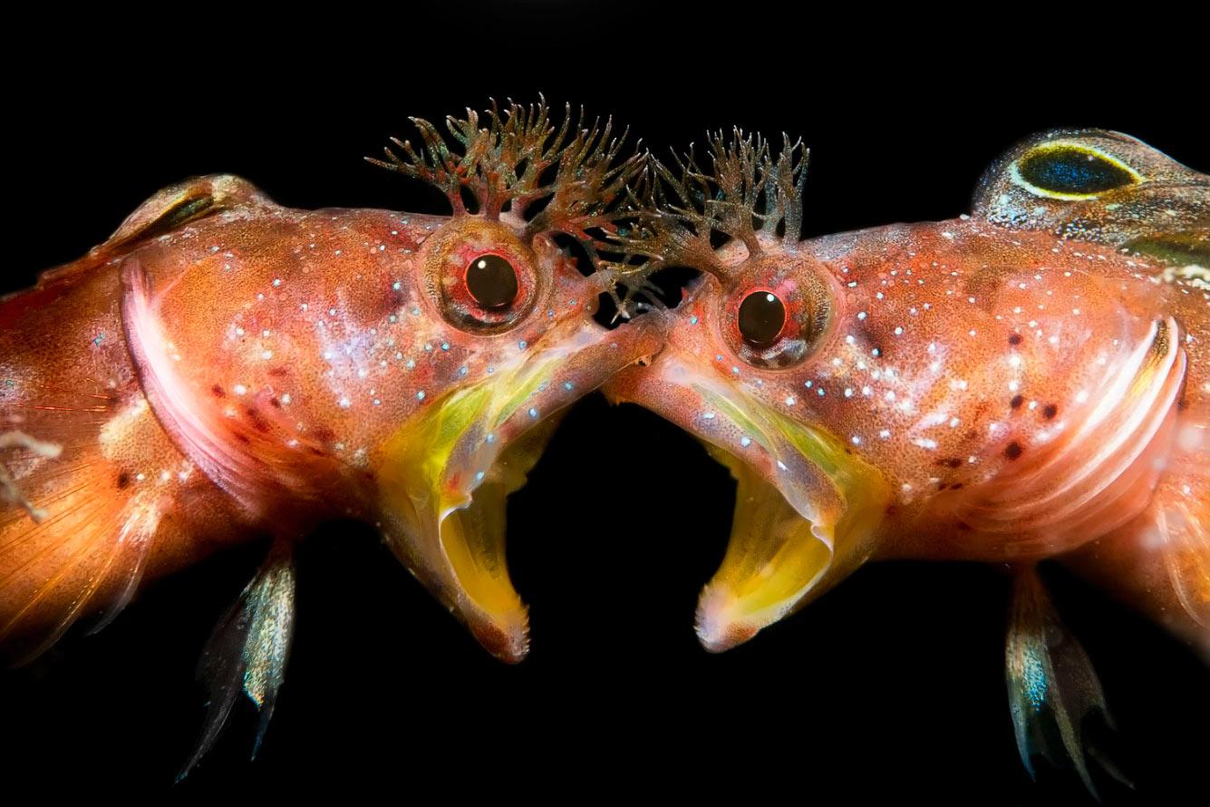 Драка морских собачек