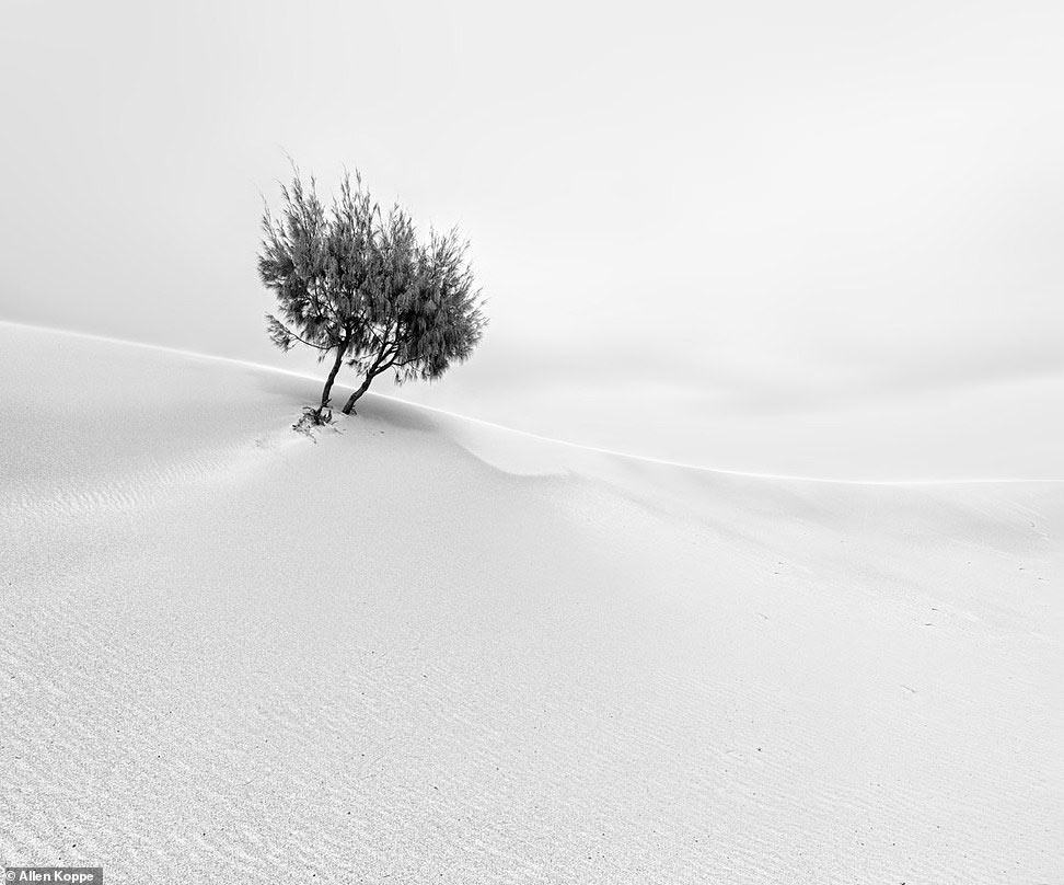 Песчаная дюна и дерево