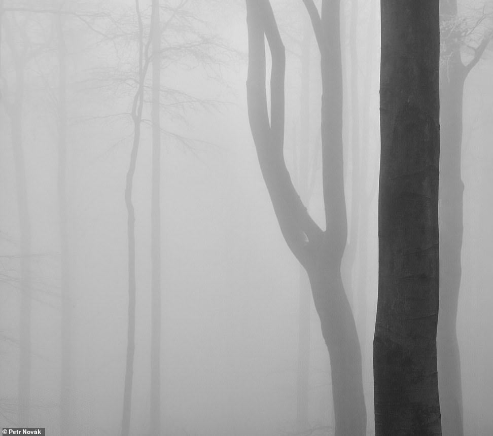 Лес на севере Чехии