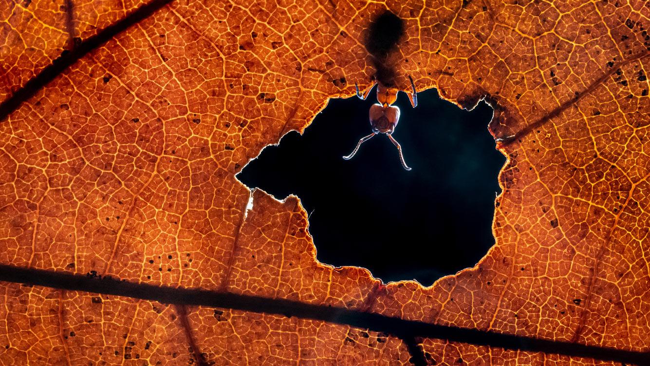 Муравей на листе в Аликанте, Испания
