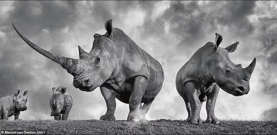 Животные в дикой природе