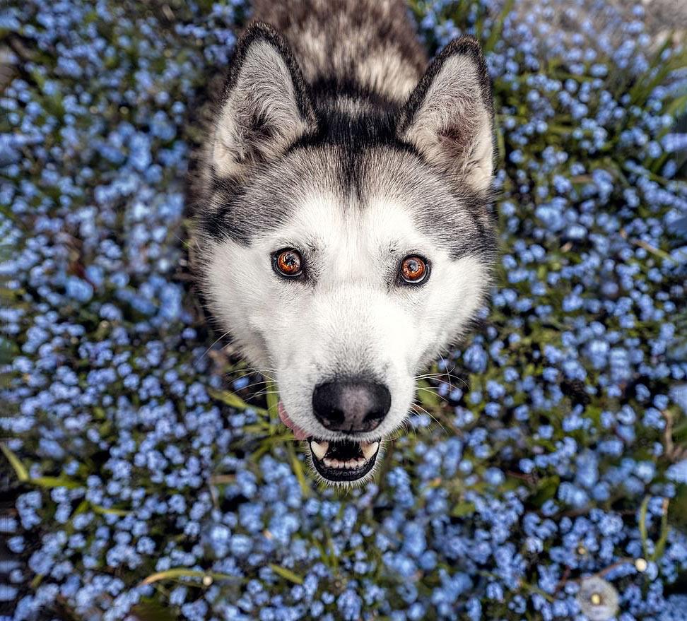 Собаки среди цветов