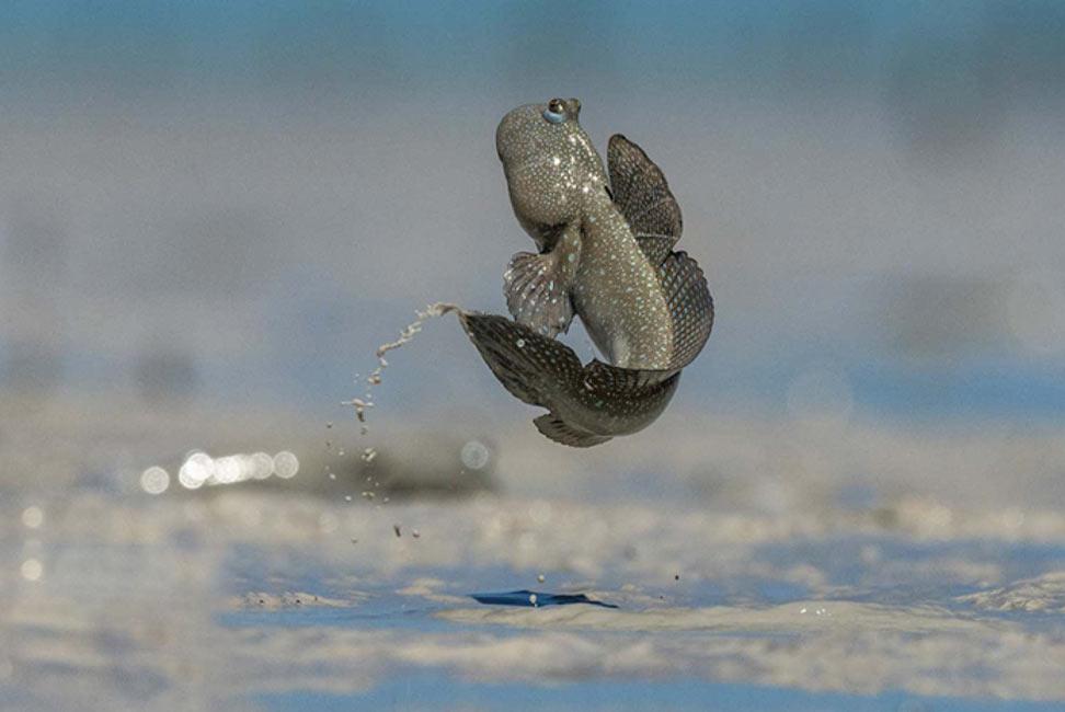 Фотография летящего прыгуна