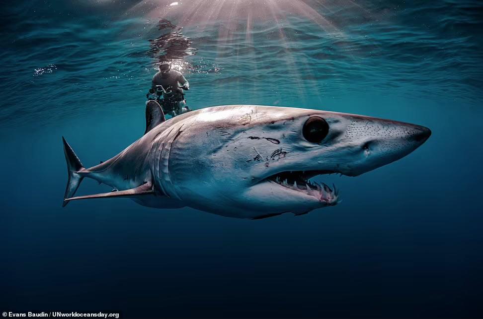 Конкурс 2021: Всемирный день океановКонкурс 2021: Всемирный день океанов