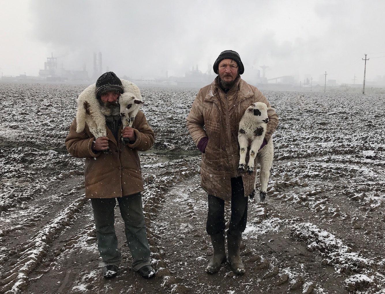 Трансильванские пастухи