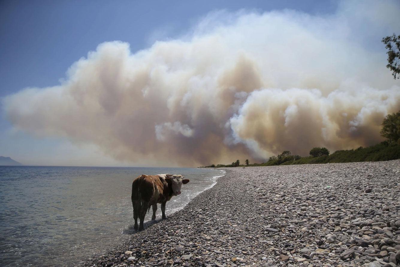 Дым от пожара в Бодруме, Турция