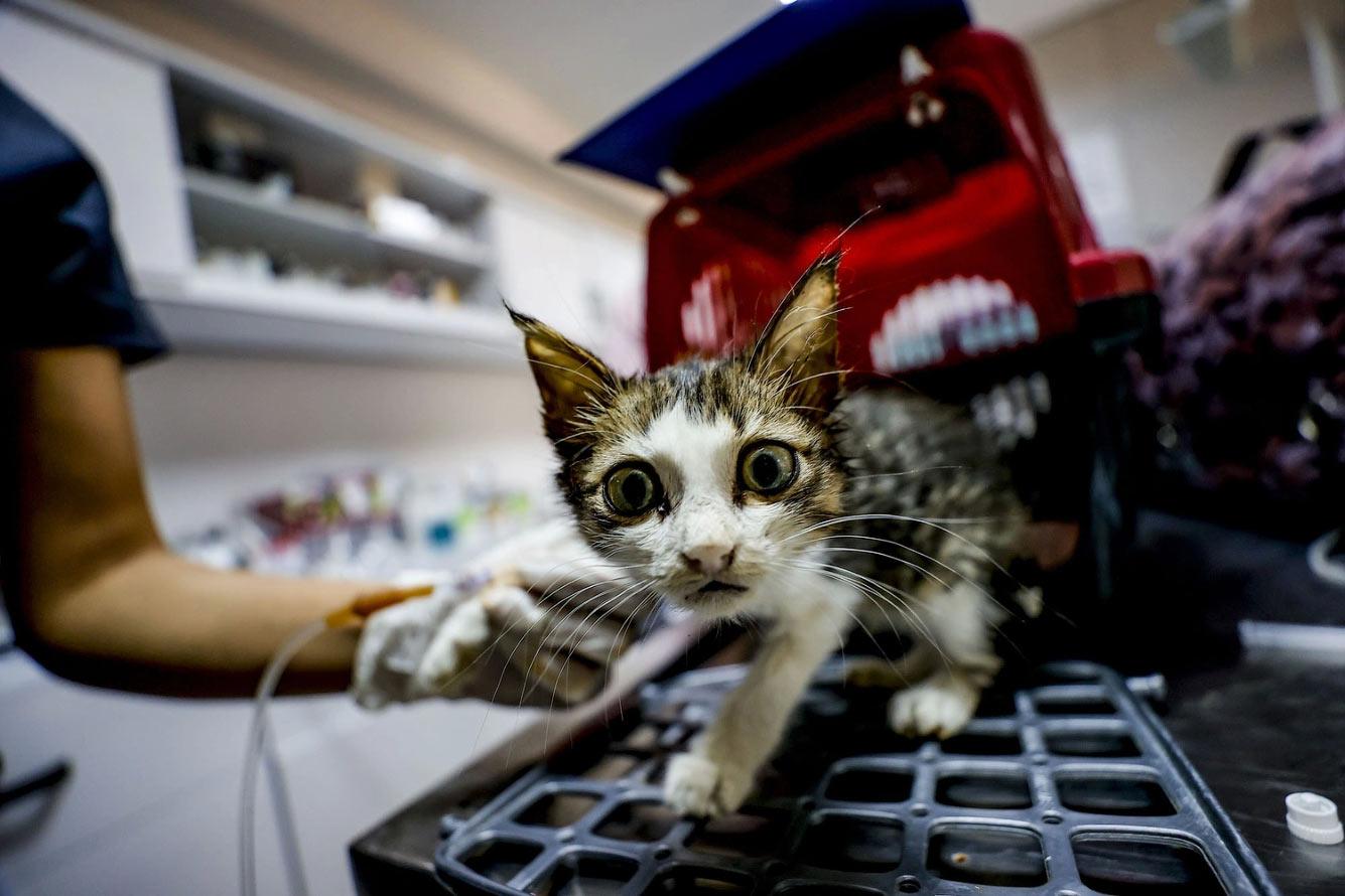 Раненый кот