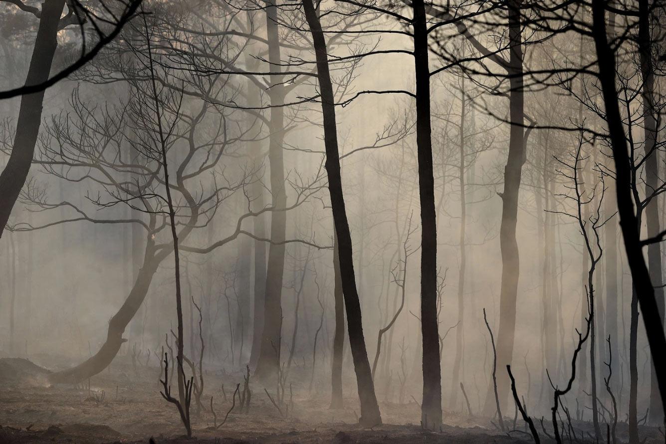 Сгоревшие деревья в районе Аспаран в Мугле, Турция