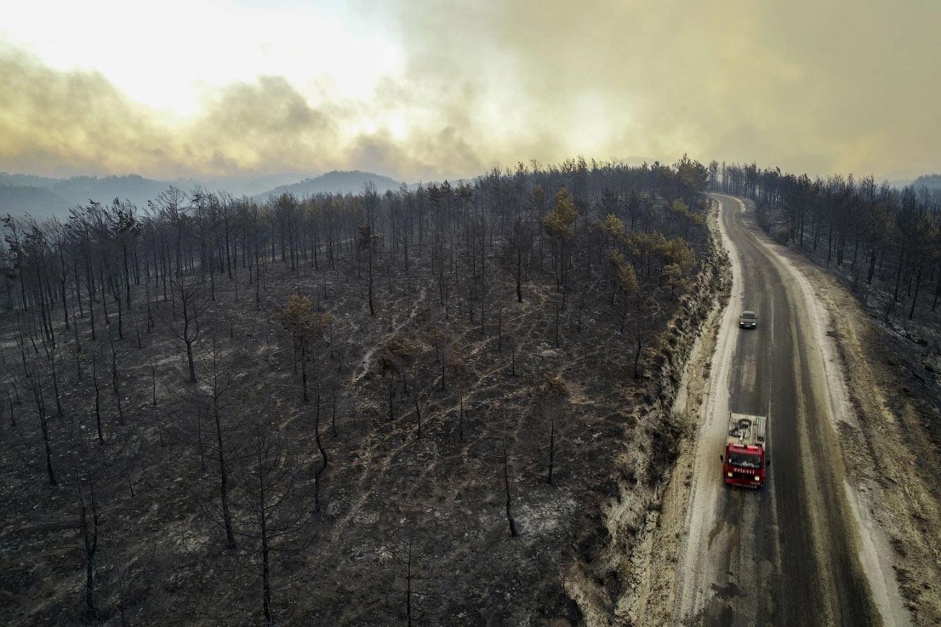 Сгоревшие деревья в районе Манавгат Анталии