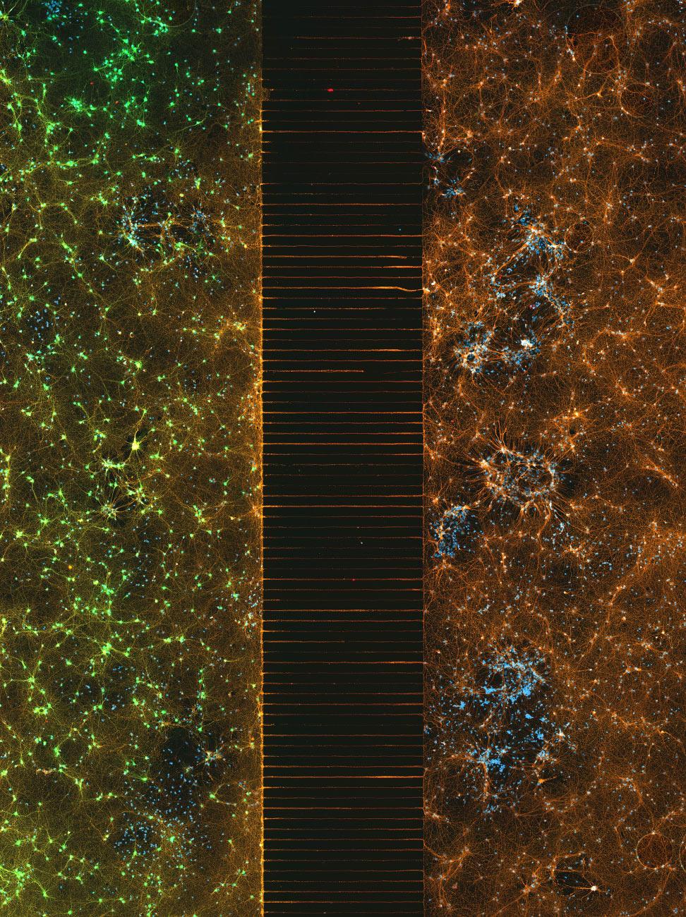 Микрофлюидное устройство, содержащее слой с 300 тыс. нейронной сети