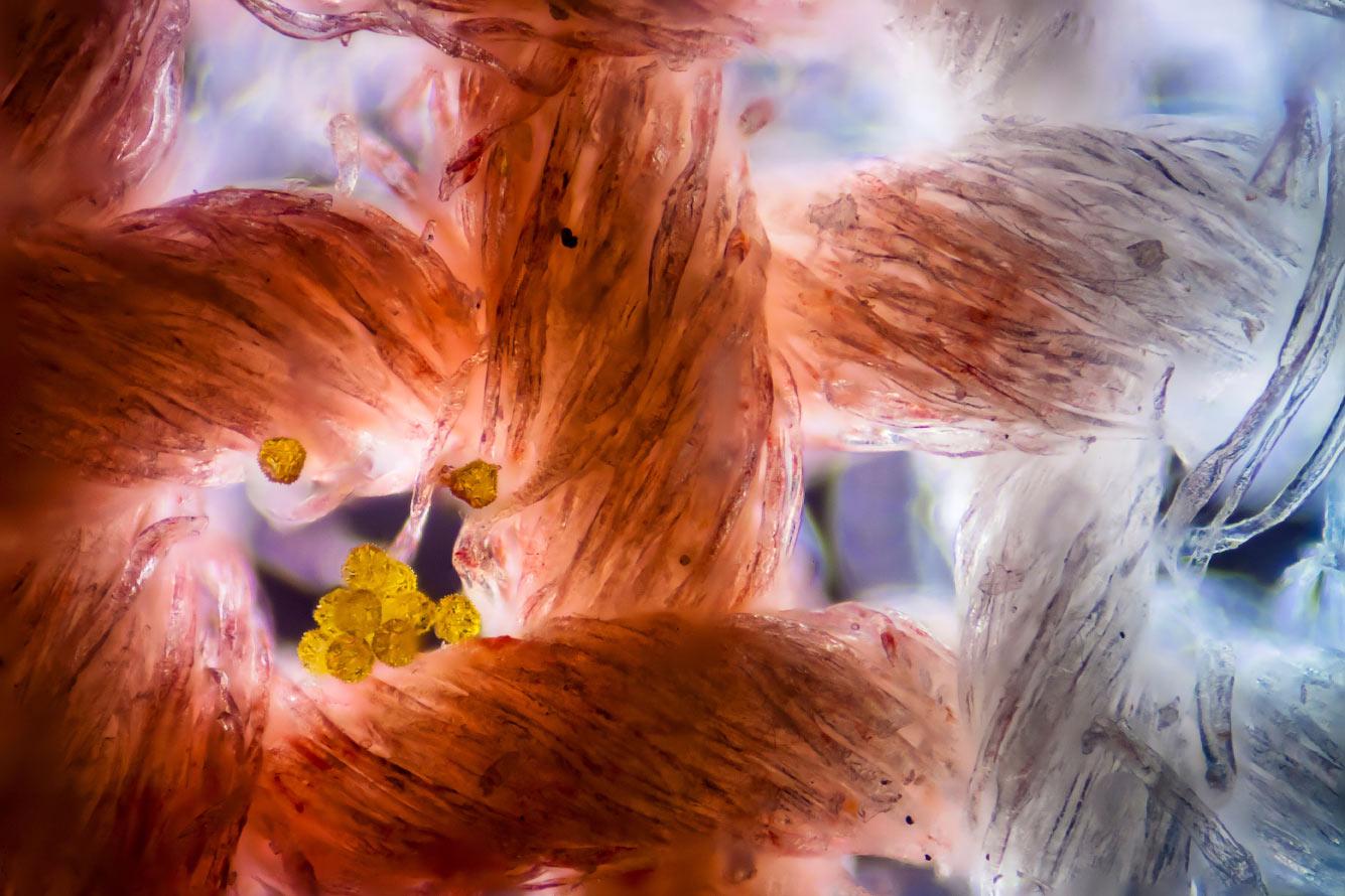 Хлопчатобумажная ткань с пыльцой