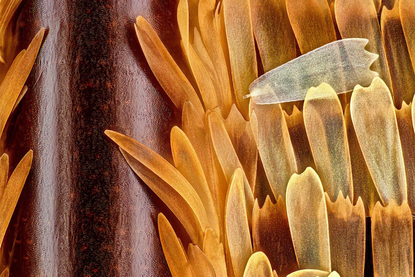Чешуя на крыле бабочки