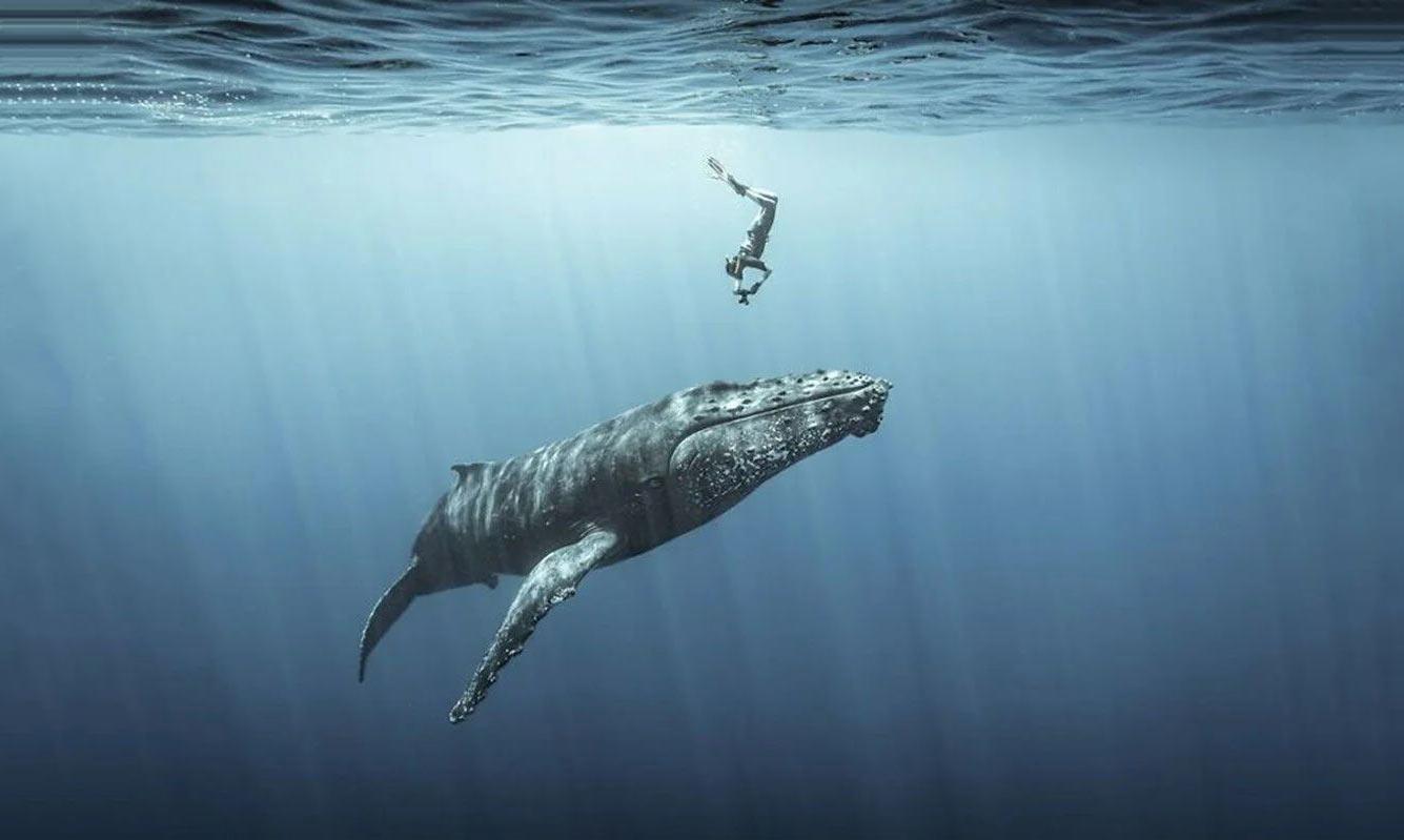 Горбатый кита, остров Реюньон