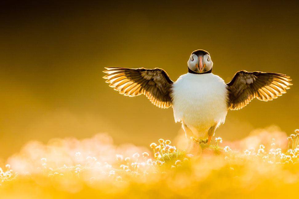 Победители конкурса на лучшие фотографии птиц birds Photographer of the Year 2021