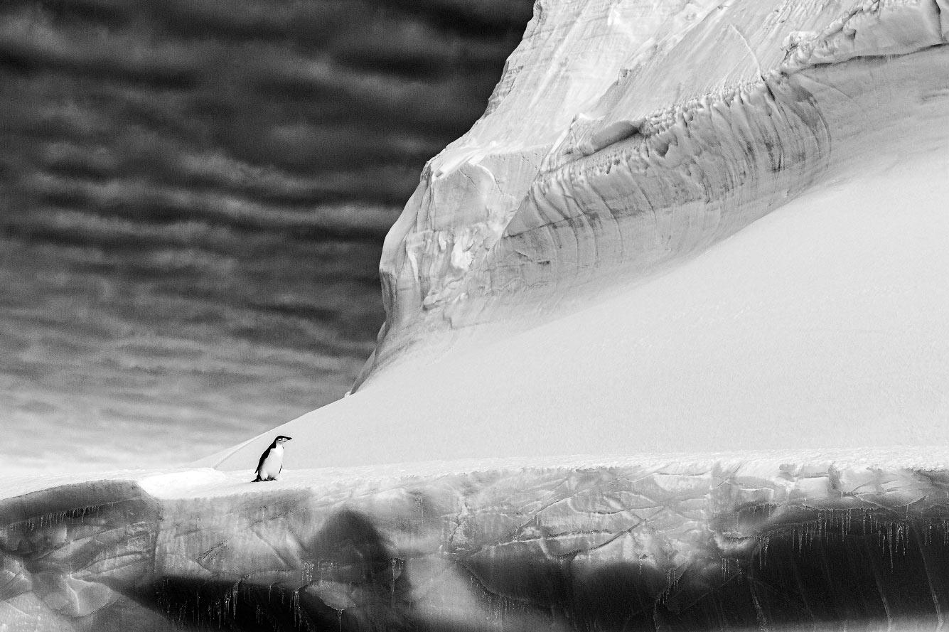 Пингвин на вершине гигантского айсберга