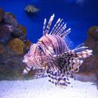 8 самых опасных морских тварей
