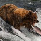 Конкурс фотографий дикой природы