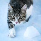 Интересные факты о кошках, которые вы точно не знали