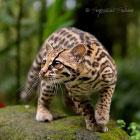 30 красивых животных, которых можно встретить в Коста-Рике
