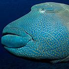 Жители подводного мира. Часть 4