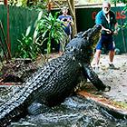 Кассиус Клей - самый большой в мире крокодил