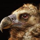 Портреты животных. Часть 2