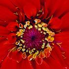 Текстуры в природе: растения