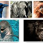 10 самых умных животных на Земле. Часть 2