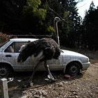 """Спасение домашних животных из зоны отчуждения вокруг АЭС """"Фукусима-1"""""""