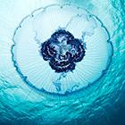 Жители подводного мира. Часть 3