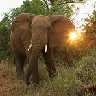 Сафари-парк в Южной Африке