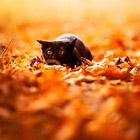 Животные в сентябре