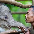 Животные и их люди