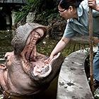 Как почистить зубы бегемоту