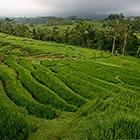 Рисовые террасы в Индонезии - всемирное наследие ЮНЕСКО