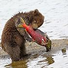 Лучшие фотографии России 2012 года: природа