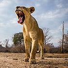 Животные, снятые скрытой камерой