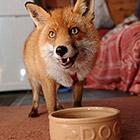 Необычное домашнее животное