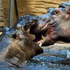Животные в фотографиях за неделю (23 - 30 января 2011)