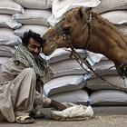 Животные в фотографиях за неделю (7 - 13 февраля 2011)
