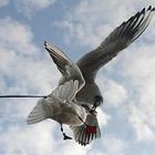 Животные в фотографиях за неделю (14 - 20 февраля 2011)