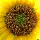 Жизнь в цвете: Желтый