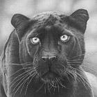 Грация и красота животных в графите