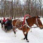 Мир в фотографиях за неделю (28 февраля - 6 марта 2011)