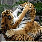 Животные в фотографиях за неделю (28 февраля - 6 марта 2011)