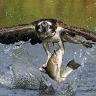 Фотографии дикой природы в динамике