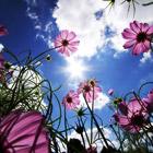 Сила цветов